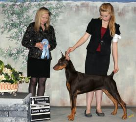 Junior Dog Training And Handling